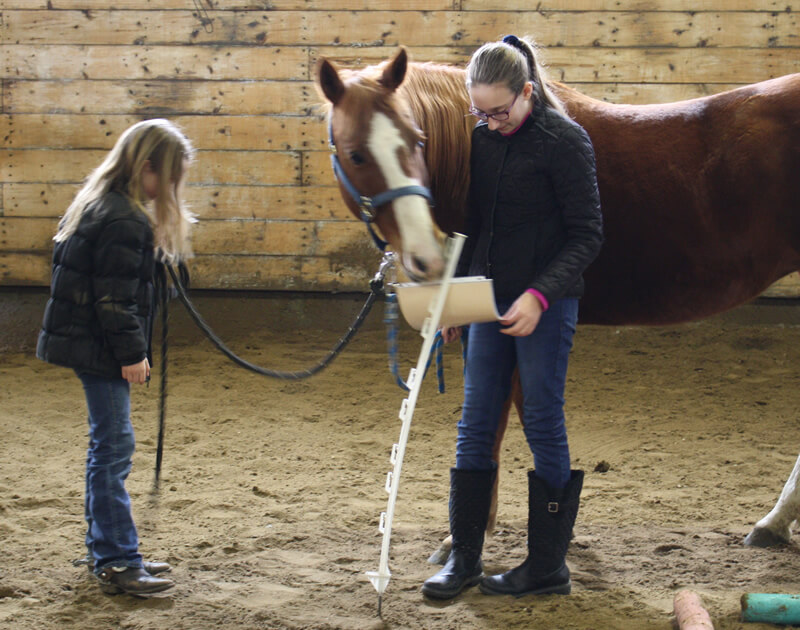 What is equine assisted learning?